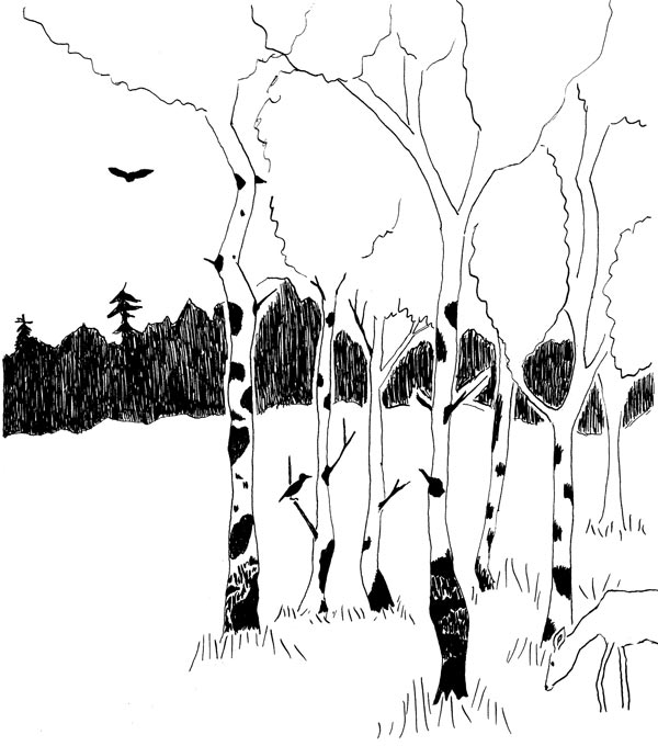 hand drawn image of a stand of birch trees with a deer grazing and an eagle overhead